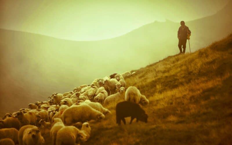 Herder zijn vraagt om daadkracht